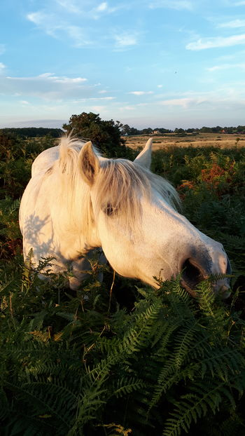 Horse in Bracken (series 1 of lots!) 🐴 Exceptional Photographs Natural Light No Filter No Edit The Week On EyeEm Beautiful Pet Portraits Mix Yourself A Good Time Beauty In Nature Nature Field Farm Rural Scene Agriculture Horses Horse Love Equestrian Life Equestrianphotography Animals In The Wild EyeEm Gallery My Cloud Obsession☁️ English Countryside Heathland  England 🌹