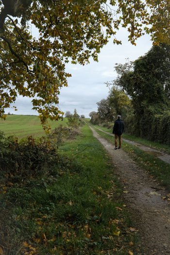 Rear view of man walking on footpath by trees