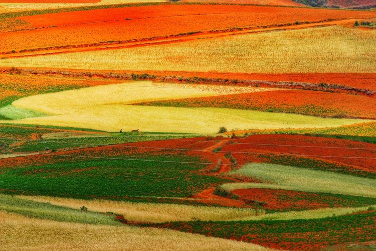 Yunnan China Photos Landscape_photography Landscape_Collection Landscape China Wheat Cereal Plant Multi Colored Rural Scene Plowed Field Backgrounds Agriculture Full Frame Field Pattern Rice Paddy Patchwork Landscape Terraced Field Rolling Landscape Plantation Rice - Cereal Plant Cultivated Land