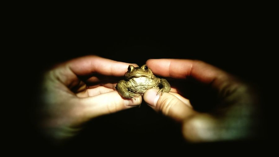 Frosch Human Hand Black Background Holding Frog Frog Perspective Froggy Style Frogs View Froschperspektive Froggie Frog Eyes Froggy Froggy!!! Frogs
