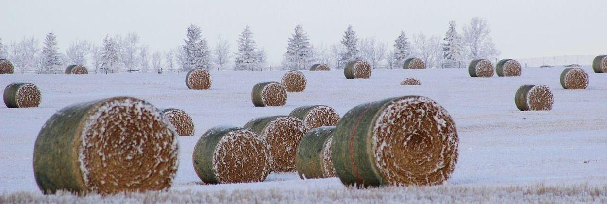 Fresh 3 EyeEm Nature Lover Canadiannature Prairies Snow Wintertime Open Edit