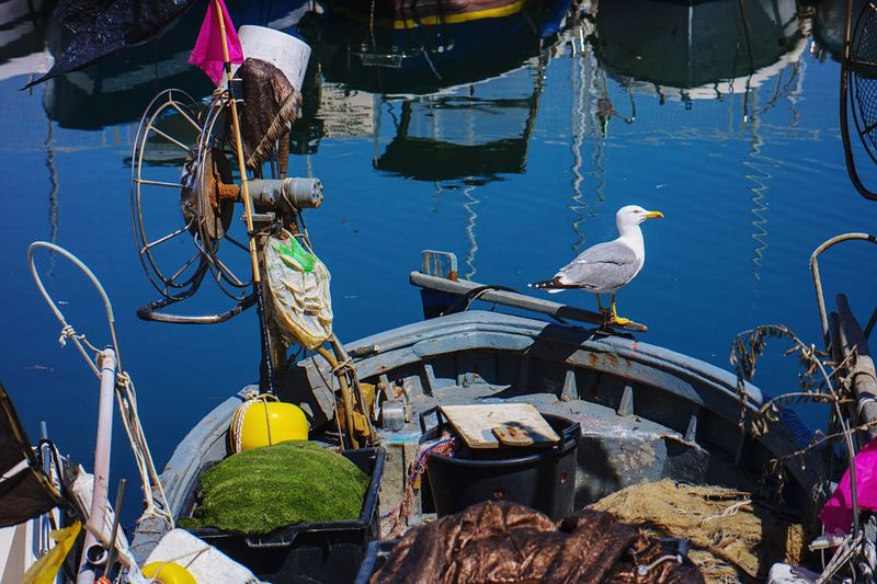 Seagull Gaeta Boat Sea Day No People Animal Nautical Vessel Bird Animal Themes Summer Exploratorium Sunlight Water Blue Outdoors