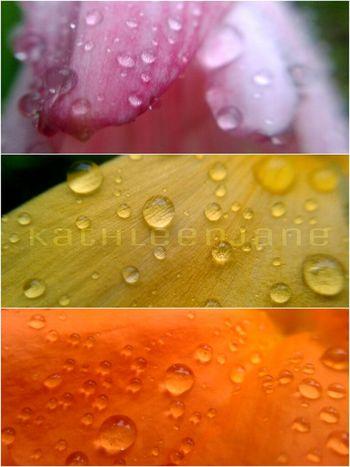 Raindrops Eyeem Philippines Mobile Photography Macro Photography