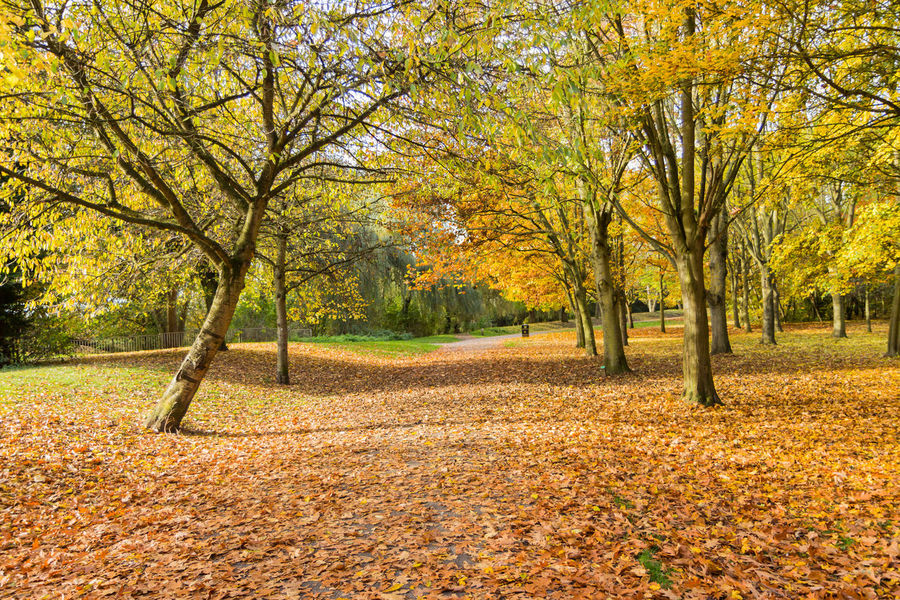 Autumn in the English countryside Autumn Colors Autumn🍁🍁🍁 Blue Sky White Clouds Countryside Uk Leaves On The Ground Outdoors Photograpghy  Park Pathways Red Leaves🍂 Yellow Leaves On Green Grass