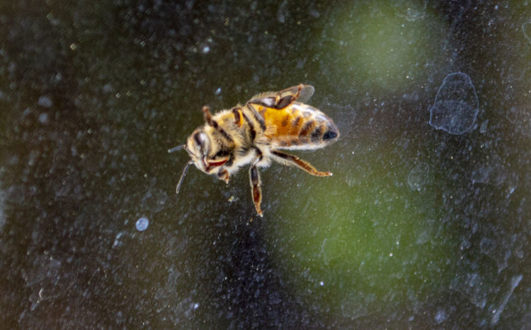 Bee... Animal Themes Animal One Animal Water Animals In The Wild Animal Wildlife Nature No People Vertebrate Day Mammal Motion Outdoors Full Length Wet Canine High Angle View Snowing EyeEm Best Shots EyeEm Selects EyeEm Gallery The Week on EyeEm The Way Forward