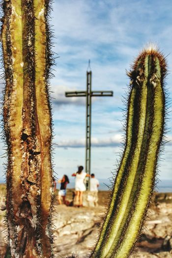 Be. Ready. Beach Sky Nature Day Outdoors Beauty In Nature Saguaro Cactus No People Close-up EyeEmNewHere Photostreets AI Now Stories From The City
