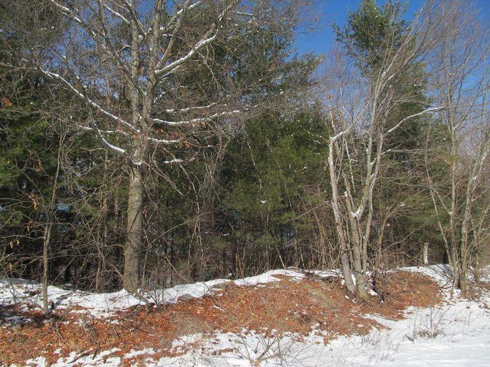 Tree Snow Plant