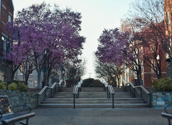 Picture this Tree City Park - Man Made Space Sky Architecture Treelined Walkway Cherry Tree Pathway The Way Forward