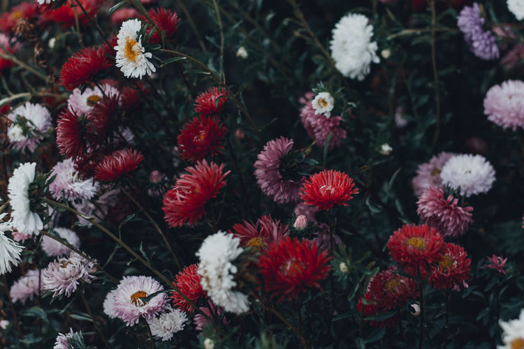 Flower Flowering Plant Fragility Plant Vulnerability  Beauty In Nature Growth Freshness Close-up Petal Flower Head Inflorescence Nature Focus On Foreground Day No People Outdoors Architecture Colorful Flowers Flowers,Plants & Garden Moody