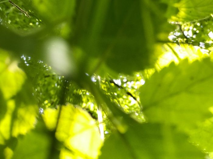 Plant Tree Green Color Growth Plant Part Leaf Beauty In Nature