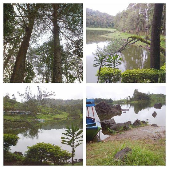 Situ Patenggang Ecosystem  Botanical Lake View Wonderful Amazing View West Java  Traveling Green Nature