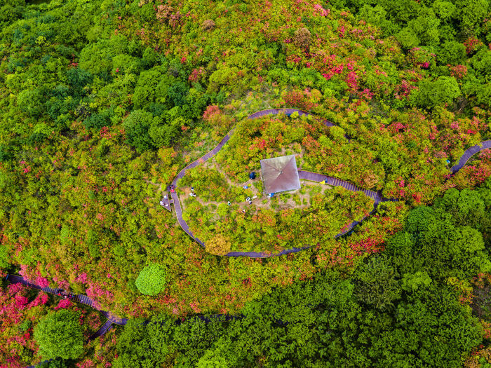 High angle view of flowering plants in park