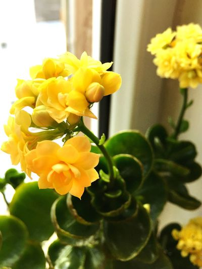 Flower Head Nature Beauty In Nature Fragility Flower Growth Yellow Plant Freshness Nature Close-up Beauty In Nature No People Leaf Day Outdoors Flowers, Nature And Beauty Flowergardendreams Happyflowers Lovely Flowermacros Happy Time Bouquet