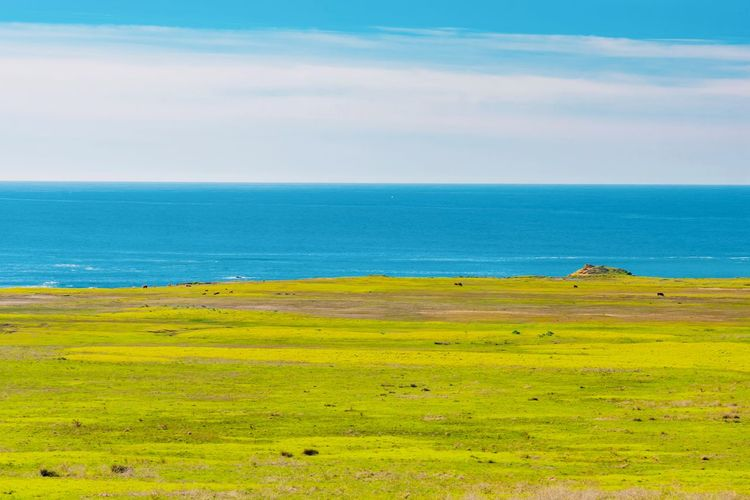 Water Horizon Scenics - Nature Sea Sky Horizon Over Water Tranquil Scene Land No People Tranquility Green Color Plant Grass Nature Beauty In Nature Cloud - Sky Environment Yellow Landscape Outdoors