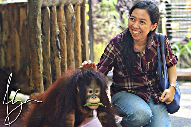 Visit jenifer the orang utan Wife Razhar TamanSafariIndonesia Bogor, Indonesia