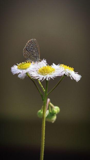 Fly Flowers Flowers,Plants & Garden Spring Flowers Butterfly Butterfly ❤ Shanghai