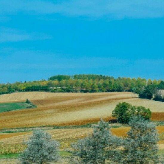 Piemonte Colline Campi Agricoltura farm nature
