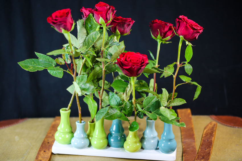Old Suitcase Roses, Flowers, Nature, Garden, Bouquet, Love, Flower Flowering Plant Plant Vase Table Beauty In Nature Freshness Plant Part Leaf Nature Close-up Red No People Green Color Petal Indoors  Flower Head Fragility Still Life Vulnerability  Flower Arrangement