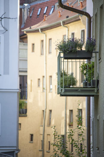 Apartment Architecture Balcony Building Building Exterior Built Structure City Day Flower Flowering Plant Focus On Foreground Growth House Houseplant Nature No People Outdoors Plant Potted Plant Residential District Sunlight Window Window Box