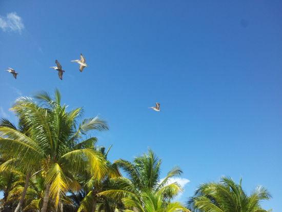 Birds Sea Sky Nature
