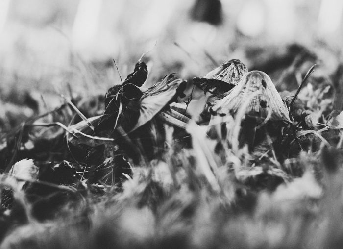 EyeEm Selects One Animal Animal Themes Animals In The Wild No People Nature Day Outdoors Close-up Mammal Nature Leaf