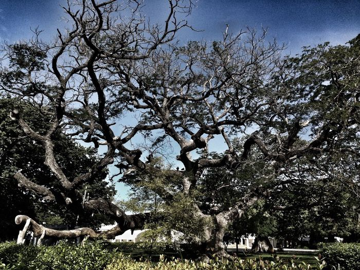 Tree Growth Low Angle View Nature Branch Mammal Sky No People Animal Themes Clear Sky Outdoors Day Domestic Animals Beauty In Nature Colombia ♥  Beauty In Nature Growth