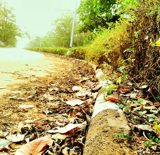 Morningjog PhonePhotography Bright Day Street Photography Greenery Springsummer India