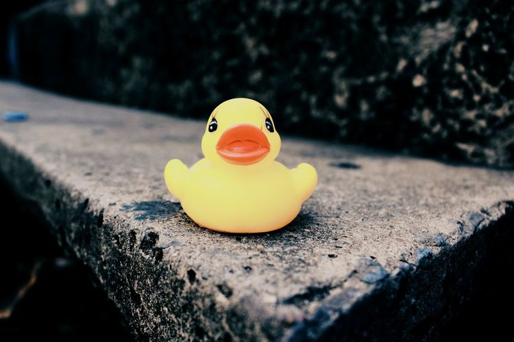 Rubber duck on wall