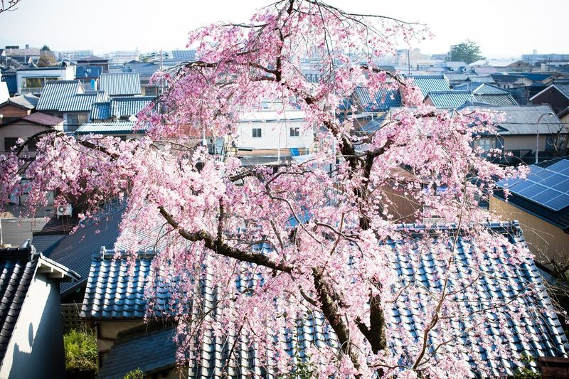 Low angle view of flower tree in city