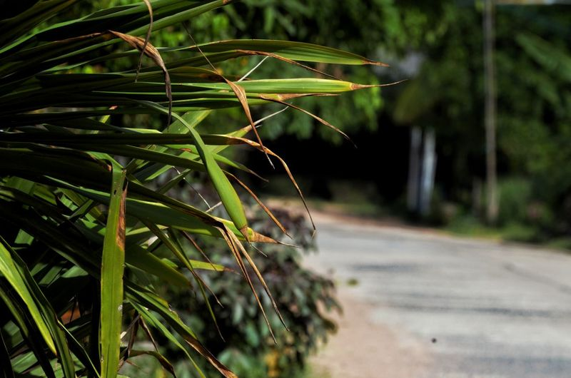 Close-up of bamboo plant on road