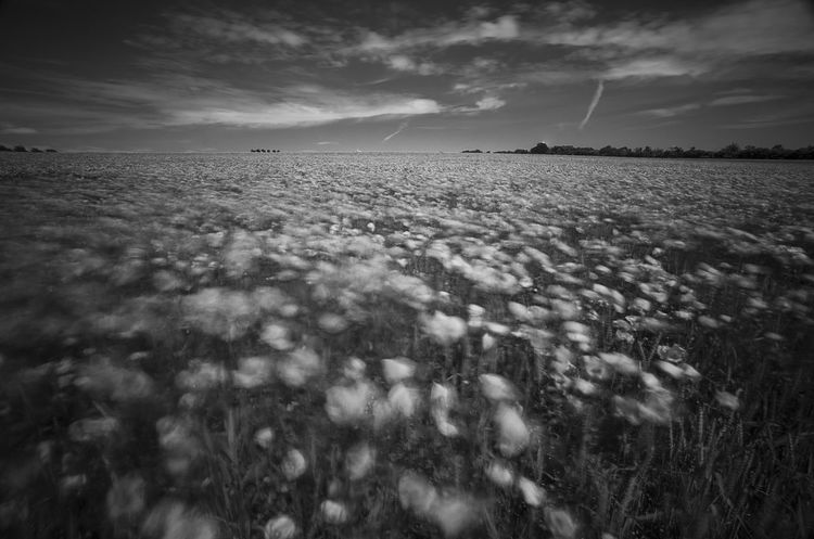 Movements Movement Photography Poppy In White Poppy Flowers Poppies Field Poppy Fields Poppies In Bw Poppy In Motion EyeEm Nature Lover Enjoying Life Nature_collection The Great Outdoors - 2016 EyeEm Awards Kronsberg Hanover Monochrome Photography Naturelovers capturing motion From My Point Of View Eyeem Market EyeEm Gallery Nature Photography EyeEm Flower Wind Movement Nature Is Art Poppy Season Black And White Welcome To Black The Great Outdoors - 2017 EyeEm Awards Sommergefühle EyeEm Selects Breathing Space Investing In Quality Of Life The Week On EyeEm EyeEmNewHere Your Ticket To Europe Mix Yourself A Good Time Been There. Discover Berlin Done That. Lost In The Landscape Second Acts Be. Ready. Black And White Friday EyeEm Ready   AI Now An Eye For Travel Go Higher Visual Creativity Summer Exploratorium