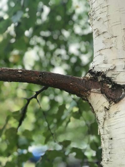 Tree Focus On