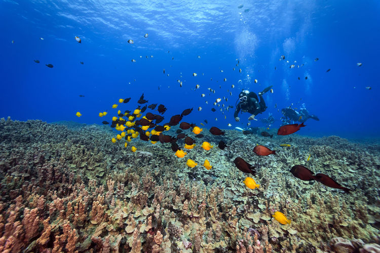 Saipan underwater life Adult Animals In The Wild Beauty In Nature Coral Day Exploration Fish Large Group Of Animals Multi Colored Nature One Person Outdoors People Reef Saltwater Fish School Of Fish Scuba Diving Sea Sea Life Tropical Climate Tropical Fish UnderSea Underwater