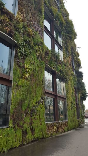Grass wall Architecture Building Exterior Built Structure Close-up Day Grass Grasswall Green Color Growth Ivy Nature No People Outdoors Plant Tree Window