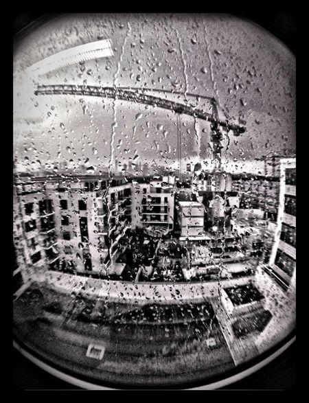 A Crane In The Rain. IPhone 4S. Olloclip Fisheye