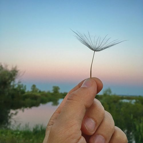 Dandelion Human Hand Hand Sky Human Body Part One Person Plant Holding Personal Perspective Finger Unrecognizable Person Human Finger Close-up