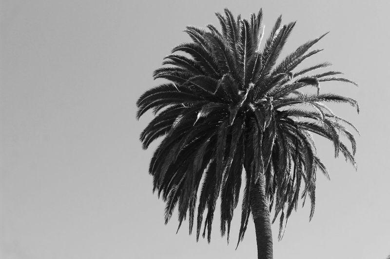More from Santa Monica California Trees Sky Blackandwhite Vscocam