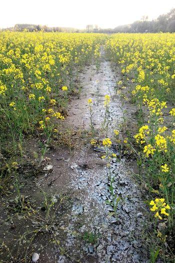 Hayat uzun bir yoldur yürümekten vazgeçmeyen çiçekleri görür, oturup bekleyen çamuru... Relaxing Hello World Yellow Sunrise şiirkalbinde Beauty Hugging A Tree Green Edirne Life