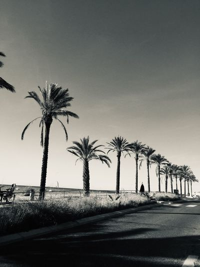🌴🌴🌴 Bandol Beachphotography Beach Sky Sea Palm Palm Tree Sky Tree Plant Tropical Climate Palm Tree Nature Clear Sky Growth No People Outdoors Day Sunlight Architecture Copy Space Street Road Transportation Low Angle View Built Structure City