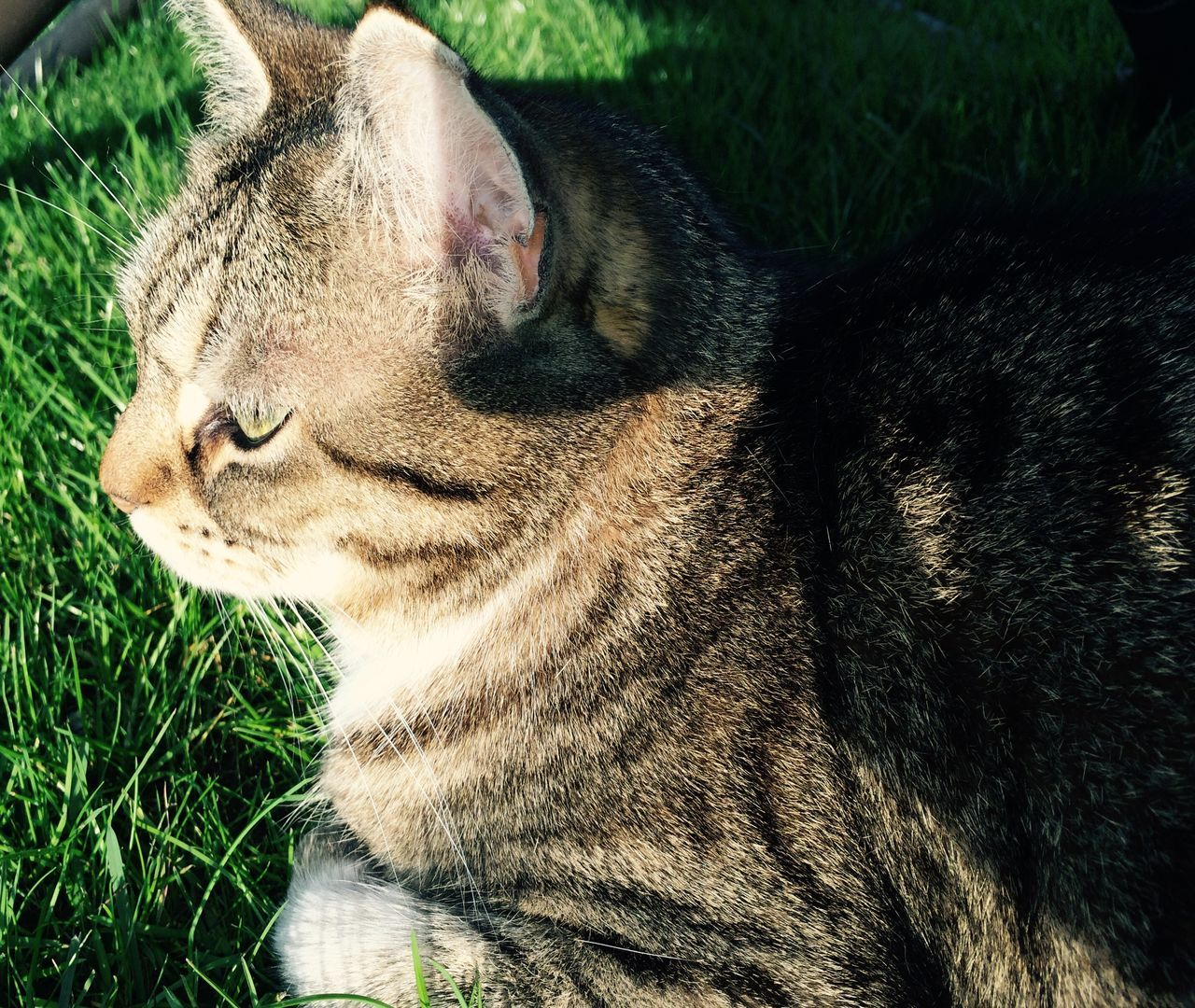 High Angle View Of Cat On Grassy Field
