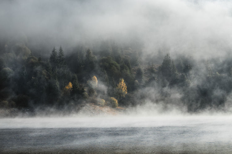Fog Scenics - Nature Tree Beauty In Nature Tranquility Nature Water Plant Tranquil Scene No People Environment Non-urban Scene Forest Mountain Outdoors Day Land Idyllic Hot Spring Power In Nature Fog Over Water Nature Landscape_Collection Tranquility Trees
