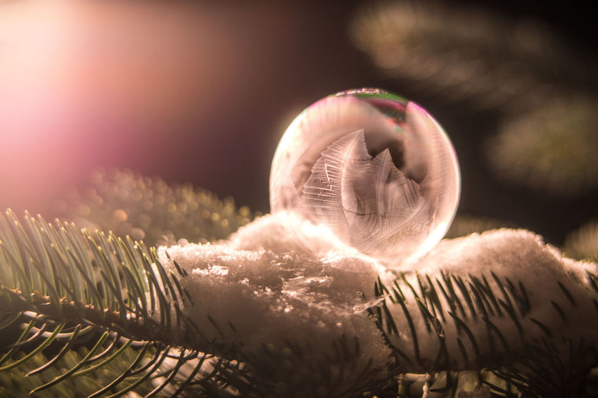 Frozen Bubble Soap Bubbles Winter Snow Tree Cold Cold Temperature Night Dark darkness and light Beauty In Nature Wintertime Winter Wonderland Winter Trees Soap Rainbow Bubbles Frozen Frozen Nature Frozen Bubbles Frozen Bubble The Still Life Photographer - 2018 EyeEm Awards