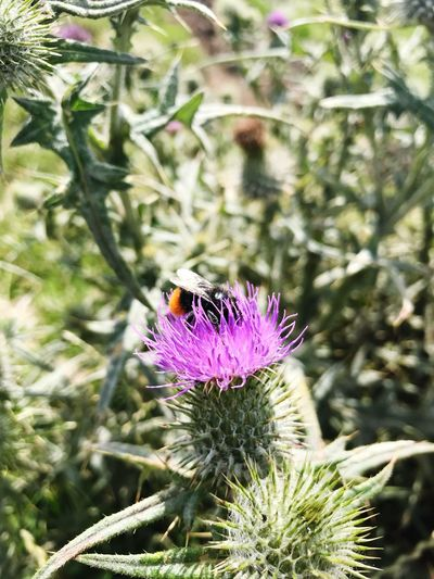 Save the Bees Nature One Animal Flower Plant Animals In The Wild Bees And Flowers First Eyeem Photo Sommergefühle EyeEmNewHere Sommergefühle