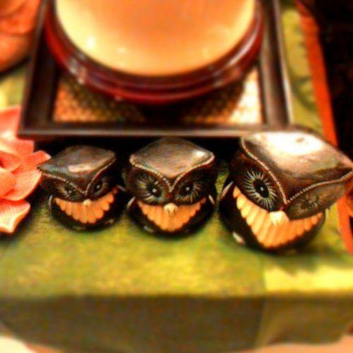 My three miniature of owl! 3siblings Miniaturepicture Brownowl Naturelovers Birds Missingthem