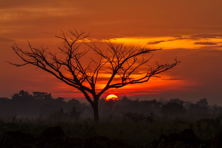 tree in field sunset backgroundform Thailand Sunset Orange Color Beauty In Nature Scenics - Nature Sky Tree Plant Tranquil Scene Cloud - Sky Silhouette Tranquility Non-urban Scene No People Idyllic Environment Bare Tree Nature Landscape Outdoors Land Isolated