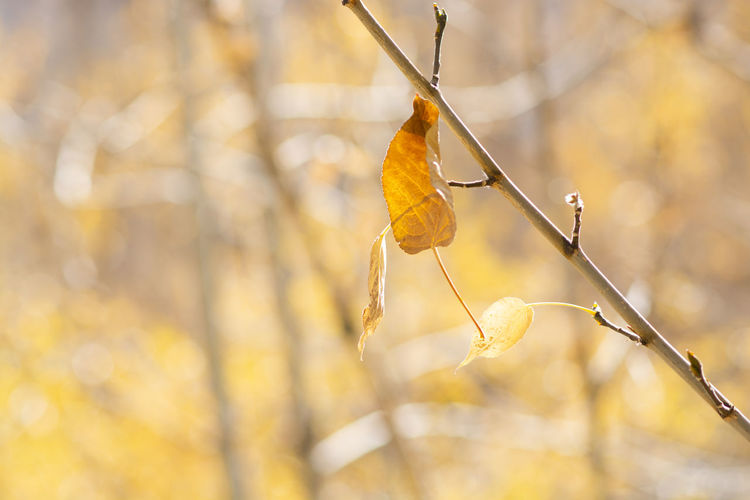 Focus On Foreground Animal Plant Close-up Day No People Nature Branch Invertebrate Yellow Insect Leaf Plant Part Tree Outdoors Change Butterfly - Insect Autumn Yellow Leaves Fall Forest Tree