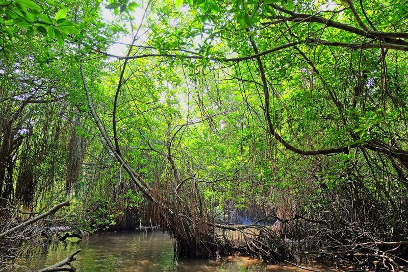 Mangroves Sri