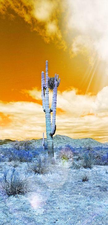 inverted desert Nest Saguaro Cactus Sonoran Desert Arizona Desert Arizona Orange Blue Cactus Sun Sun Glare Clouds Desert Spring Colorful Golden Hour Sunrise Dawn Landscape EyeEm Selects Sunset Owl Bird Flying Sky Close-up Hawk - Bird Bird Of Prey Hawk