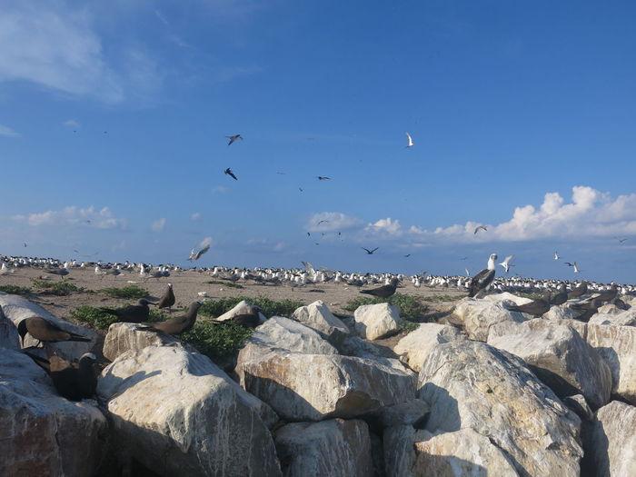 Seagulls flying over rocks against blue sky