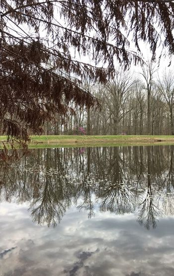 Finally getting some time to roam around in the woods. Beginning to feel at home in North Carolina. Breaking In My New Hiking Shoes Hagan-Stone Park Water Tree Reflection Sky Tranquility